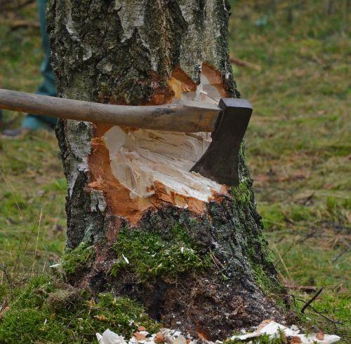 cut tree axe wood