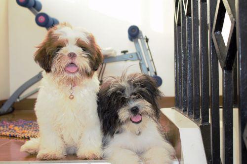 cute dogs happy dog
