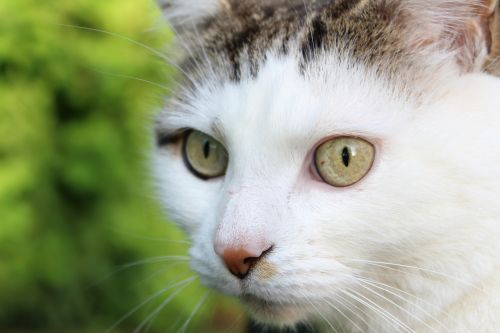 cute cat animal