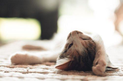 cute  mammal  sleepy cat