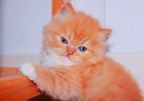 cute  domestic  cat