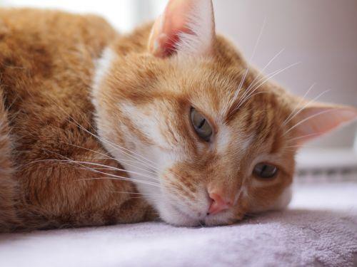 cute cat sleepy animal