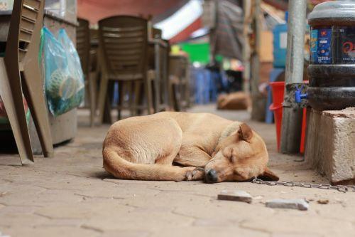 cute dog sleeping dog pet