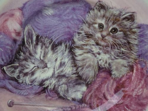 Cute Kittens Plate Design
