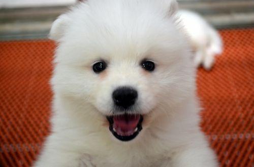 gyvūnai, šuo, šunys, šuniukas, šuniukas, naminis gyvūnėlis, mielas šuniukas