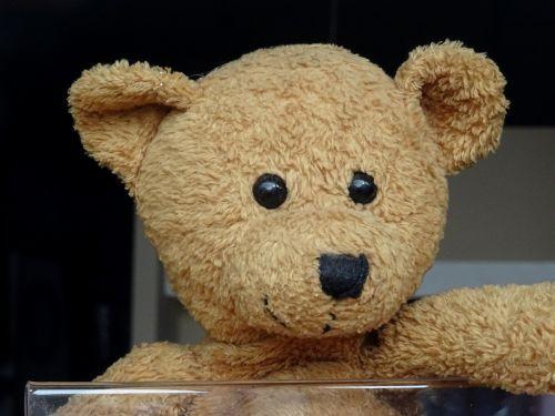 Cute Teddy Bears Face