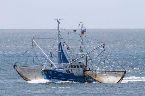 cutter shrimp networks
