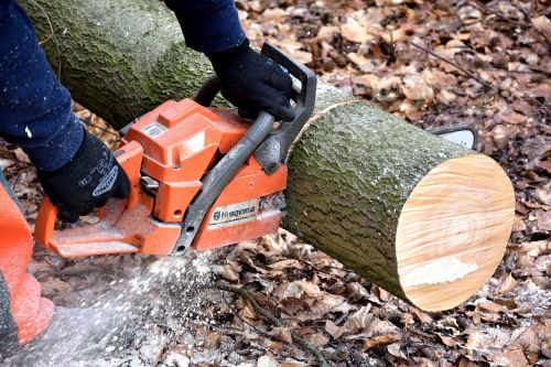 cutting wood lumberjack chainsaw
