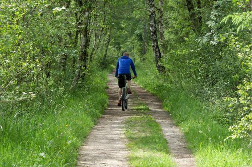 dviračiu,dviratininkai,miškas,toli,gamta,medžiai,miško takas,takas,gamtos takas,žygiai,pavasaris,vaikščioti,Promenada,žalias,idilija,atsigavimas,šventė,atsipalaidavimas