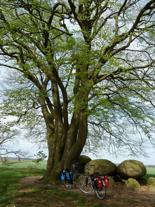 cycling bicycle tour trees