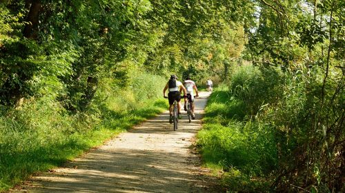 cycling cyclists forest
