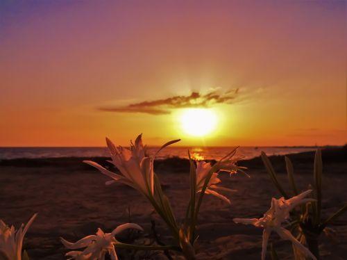 cyprus ayia napa flowers