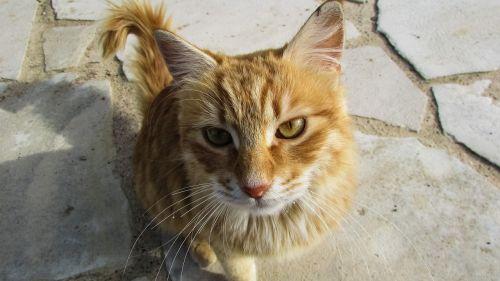 cyprus cat kitty