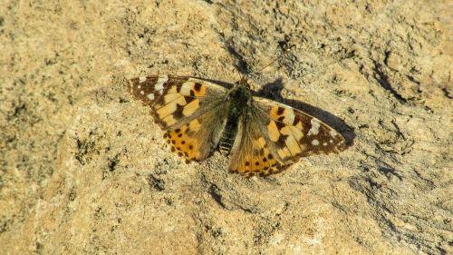 Kipras,cavo greko,Nacionalinis parkas,drugelis
