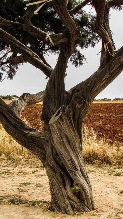 Kipras,cavo greko,medis,gamta