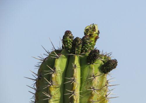 cyprus ayia napa cactus park