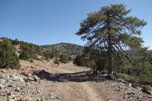 cyprus mountains troodos