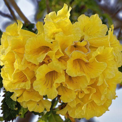 Kipras,gėlės,augalas,lapai,gamta,gėlė,sezonas