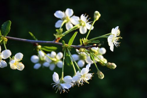 dacha living nature plant