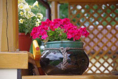 dacha flowers flower bed