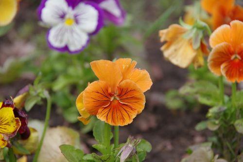 dacha flowers summer