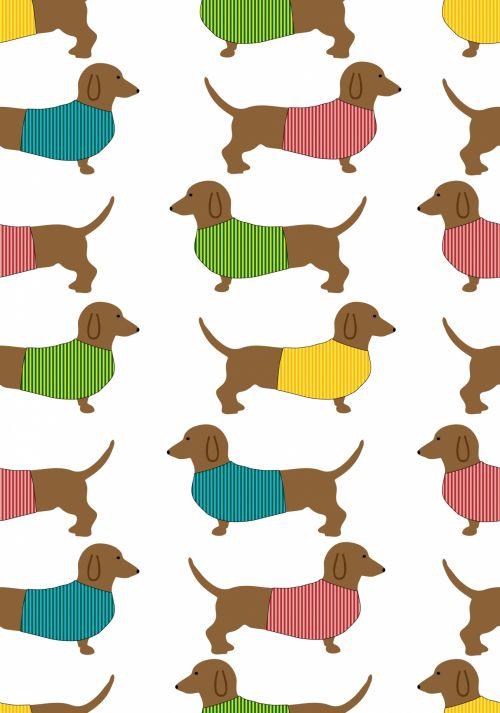 Dachshund Dog Cute Wallpaper