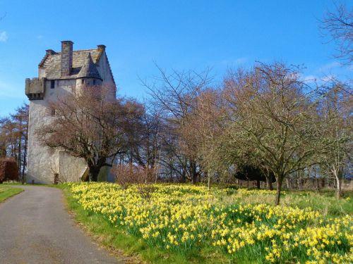 narcizai, pavasaris, bokšto namas, XIV amžius, be honoraro mokesčio
