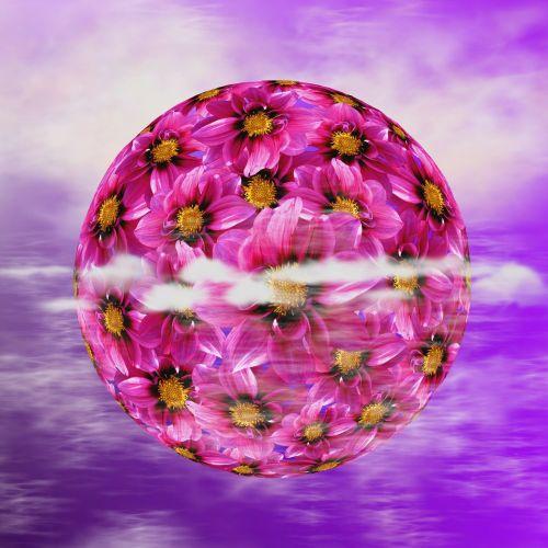 dahlia dahlia dahlia blossom