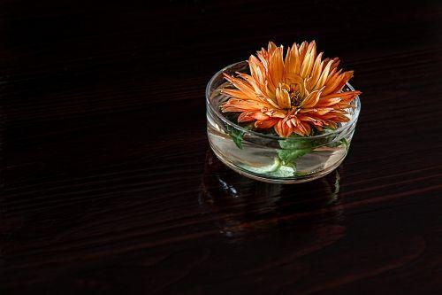 dahlia flower petal