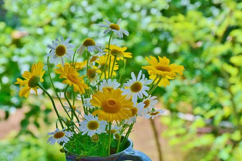 daisies  sunflower  wildflowers