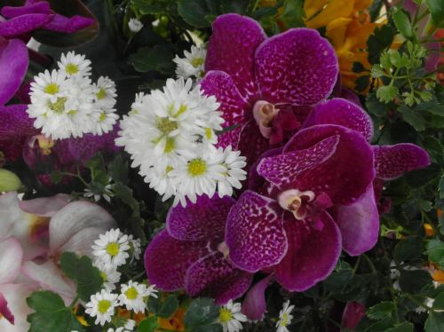 Daisies And Orchids