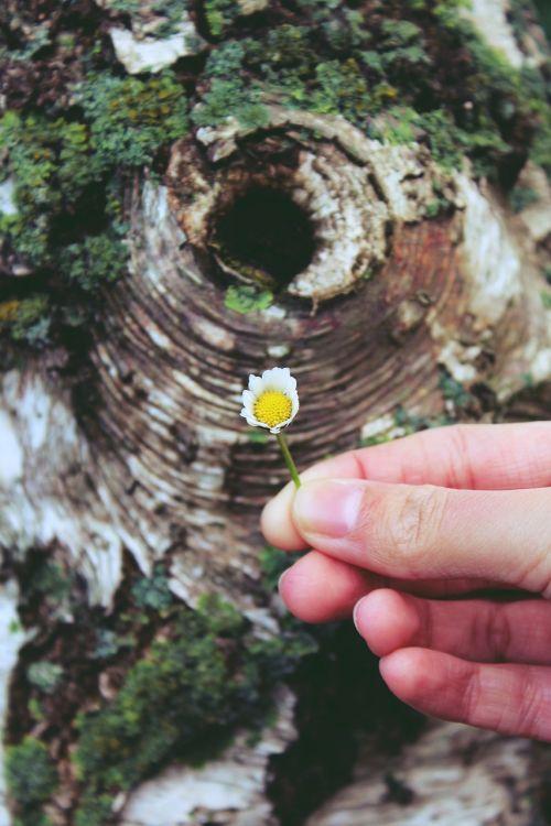 daisy hibernation hand