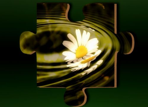 daisy puzzle flower