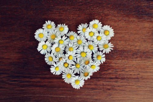daisy heart daisy heart