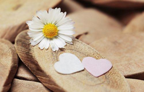 daisy heart herzchen