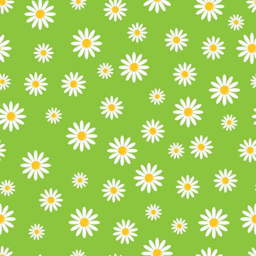 daisy flowers floral