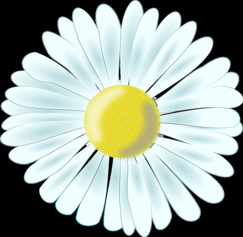 daisy  tausendschön  composites