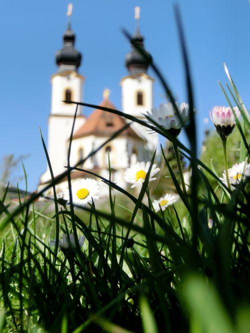 daisy aschau chiemgau
