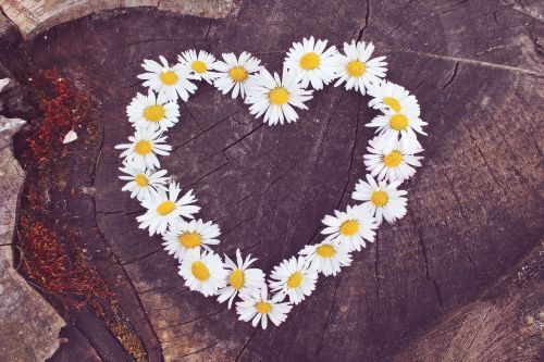 daisy heart flower heart