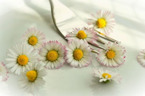 daisy edible flowers vegetarian