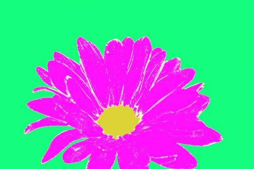 Daisy Blossoms Flora