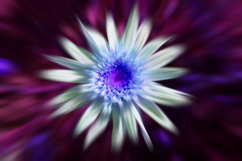 gėlė, Daisy, balta, mėlynas, blur, Daisy zoom blur