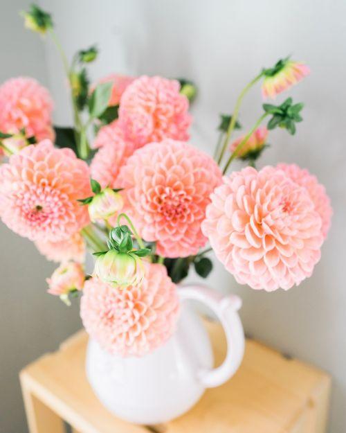 dalia flowers vase