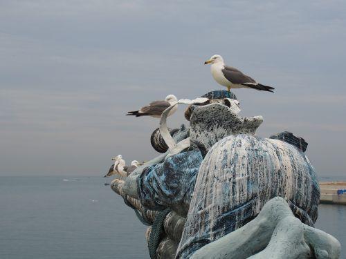 dalian seagull parked