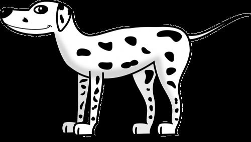 dalmatian dog pet