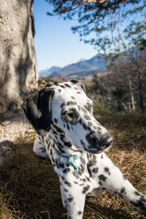dalmatians rock mountain