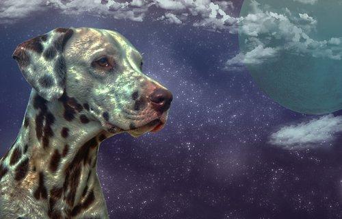 dalmatians  fantasy  dog
