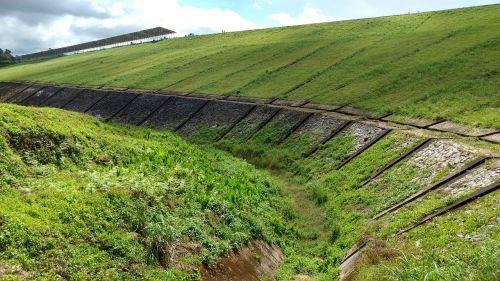 dam grass green
