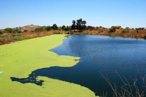 Dam With Algae Growth