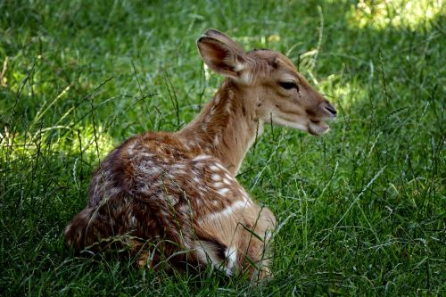 damm wild calf female